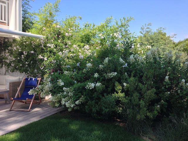 Cr ation d 39 un jardin d 39 ambiance au cap ferret paysagiste for Ambiance jardin paysagiste
