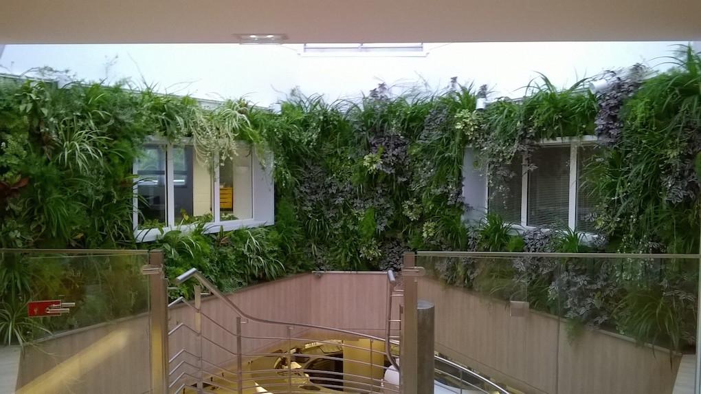 r alisation d 39 un mur v g tal en gironde 33 paysagiste bordeaux jardins eden. Black Bedroom Furniture Sets. Home Design Ideas