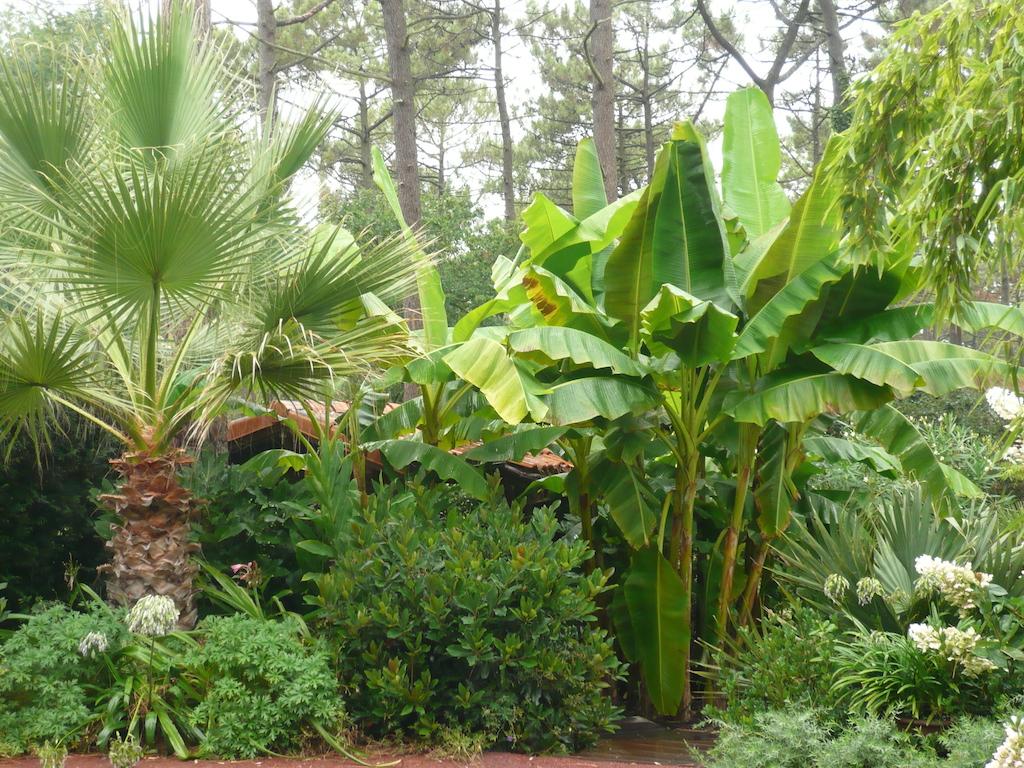 cr ation d 39 un jardin ambiance exotique sur le bassin d 39 arcachon am nagement de jardins. Black Bedroom Furniture Sets. Home Design Ideas