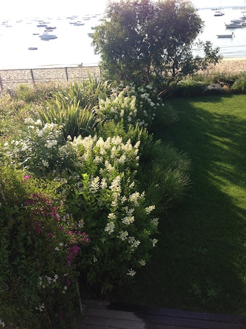Cr ation d 39 un jardin d 39 ambiance au cap ferret for Entretien jardin particulier